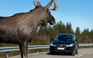 Volvo-wild-animal-detection-testing-with-moose-in-road